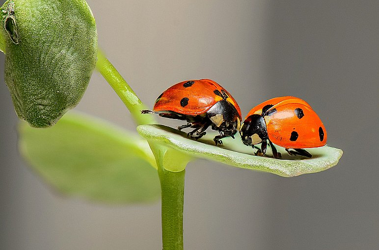 Learn the Best Pest Control Methods in Your Home