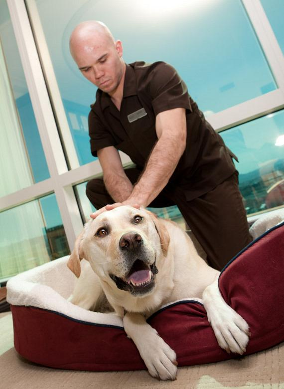 """Misty Marley, Star of """"Marley & Me"""", Receives """"Paws Massage"""" by The Spa at Trump"""