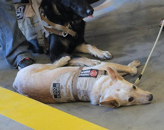 The R.W.B. Dog Tag organization provides US Veterans with Trained Service Dogs and/or providing rehabilitation dogs.