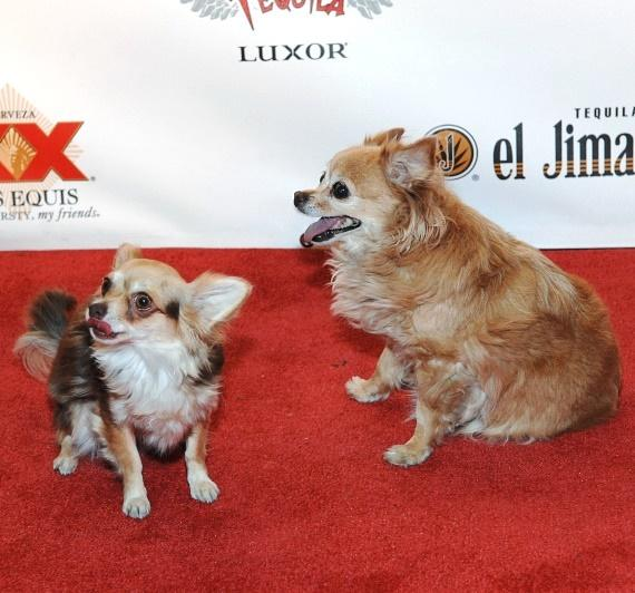 Ella and Kahlua walk the red carpet at Tacos & Tequila