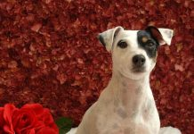 Adopt a Rescue Pet of Las Vegas to participate in Nevada's Big Give March 10