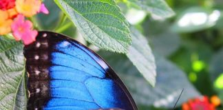 Kick off Spring with a visit to the Springs Preserve Butterfly Habitat; Reopens on March 12