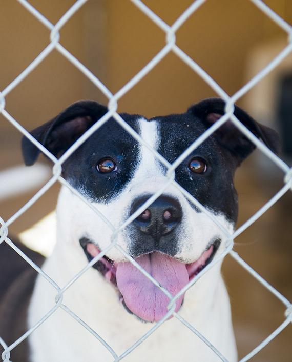 One of the dogs waiting for some kind, loving person to adopted them. How about you?