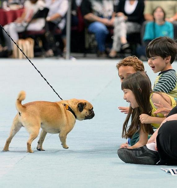 "Contestant Bogo greets excited spectators during 11th Annual ""Best in Show"""