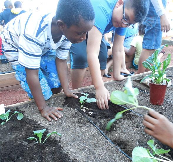 Boys & Girls Clubs of Southern Nevada Cultivates Vegetables and Local Youth with Be Green Garden Program