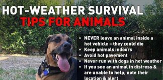 Hot-Weather Survival Tips for Animals