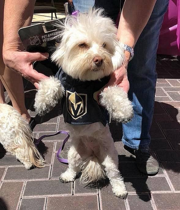 Tivoli Village Hosts Second Annual Paws Festival Sun. Apr. 28 Showing Its Support for Local Four-Legged Nonprofits