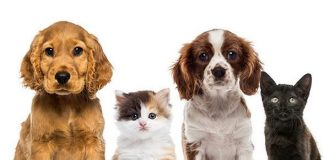 """""""LIPSHTICK"""" Partners with Noah's Animal House at The Shade Tree for Donation Drive"""