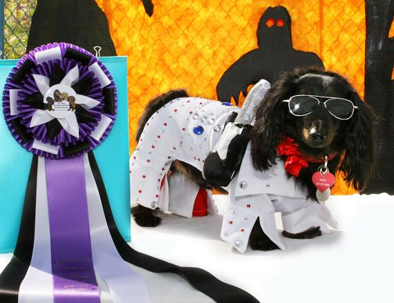 Petey-in-costume-as-Elvis-won-a-different-contest-259-e-570
