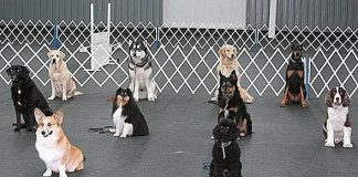 Silver State Kennel Club to Host 65th Anniversary Silver State Kennel Club All Breed Conformation Dog Show, Obedience & Rally Trials March 30-31