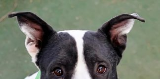 The Animal Foundation to Open New Adoption Center to the Public Feb. 12