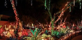 Ethel M Chocolates Opens 18th Annual Holiday Cactus Lighting Event to General Public
