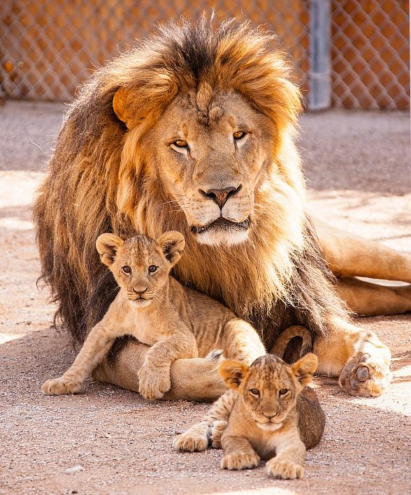 Father's Day Specials at Lion Habitat Ranch, Glowzone, Escape Reality, Cowabunga Bay and Slimsculpt