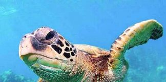 Celebrate Endangered Species Day at Shark Reef Aquarium and Siegfried & Roy's Secret Garden and Dolphin Habitat May 18