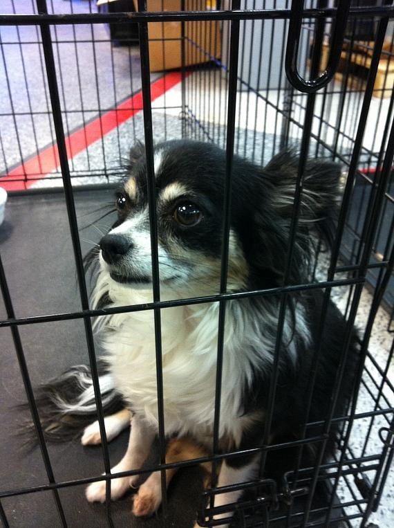 Abby in a cage at the Society before being adopted by Murray and Chloe