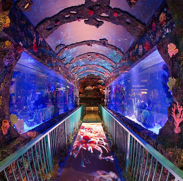 Explore Treasures of the Deep at Bellagio's Conservatory & Botanical Gardens